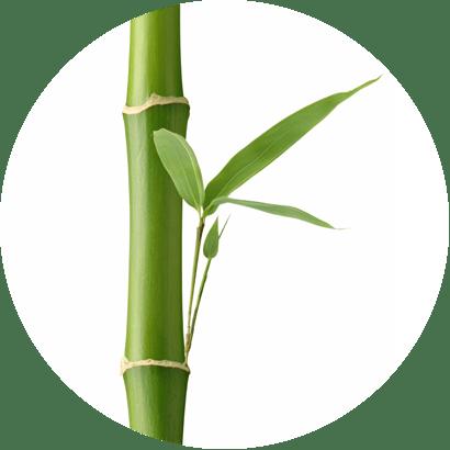 Extrait de bambou